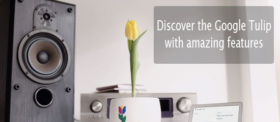 """Your Tulip flower can talk now"" Discover the Google Tulip with amazing features."
